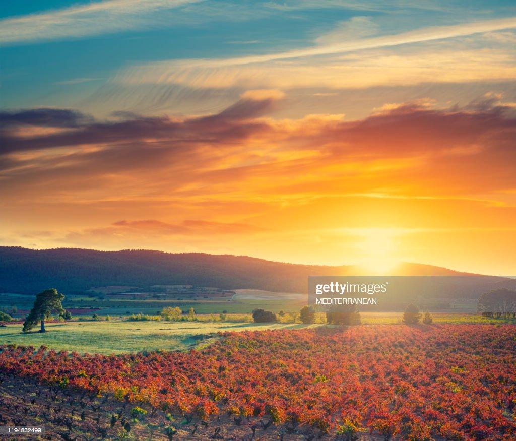 Atardecer en España en las viñas de viñedo en España en otoño : Foto de stock