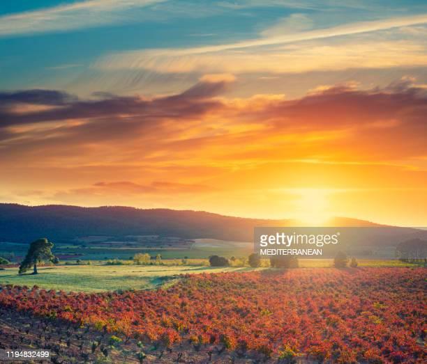 atardecer en españa en las viñas de viñedo en españa en otoño - españa fotografías e imágenes de stock