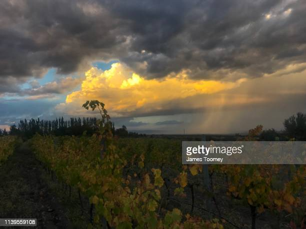 Vineyard with a storm brewing in the background over Mendoza city