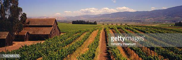 Vineyard with classic barns, mountains beyond