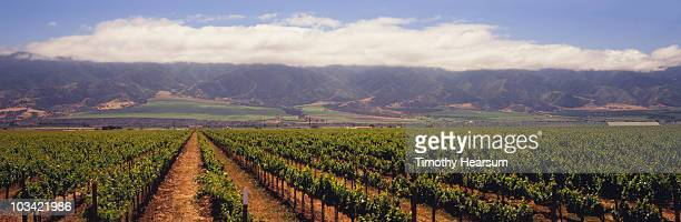 vineyard with mountains and clouds beyond - timothy hearsum stock photos and pictures