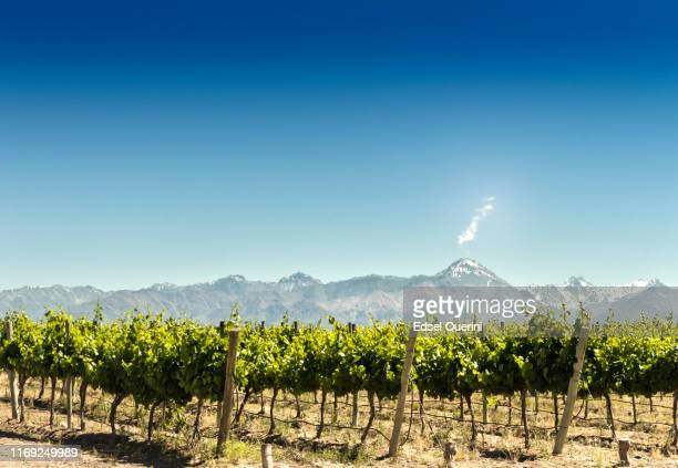 vineyard with mountains background - chile stock pictures, royalty-free photos & images