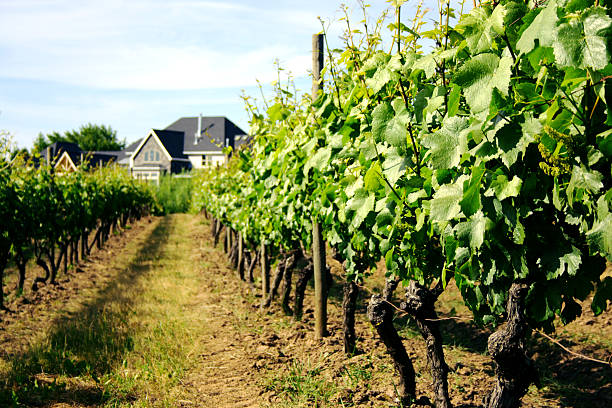 Vineyard With Tasting Cottage Wall Art