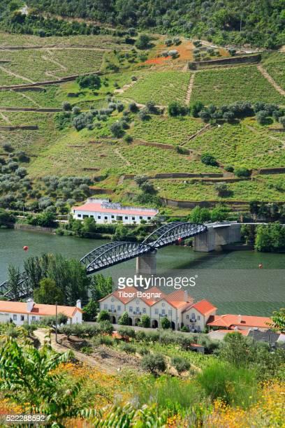 Vineyards along Douro River at Pinhao