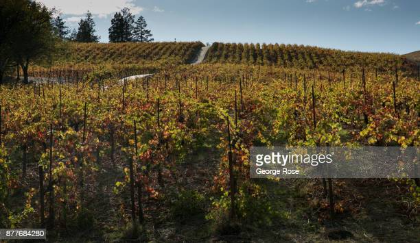 Vineyards along West Dry Creek Road are viewed on November 2 near Healdsburg California With the arrival of fall tourists by the thousands head to...