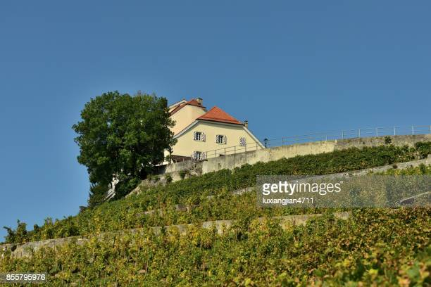 vineyards and cottages - vaud canton stock pictures, royalty-free photos & images