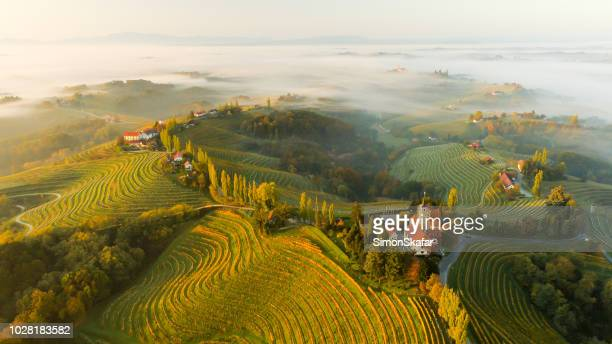 Vineyards and houses on hills, Jeruzalem, Slovenske Gorice, Prlekija, Styria, Slovenia