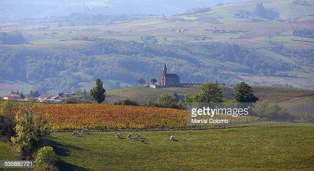 Vineyards and landscape in Beaujolais region