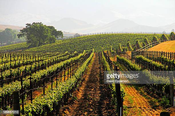 Vineyards and landscape in Santa Ynez Valley