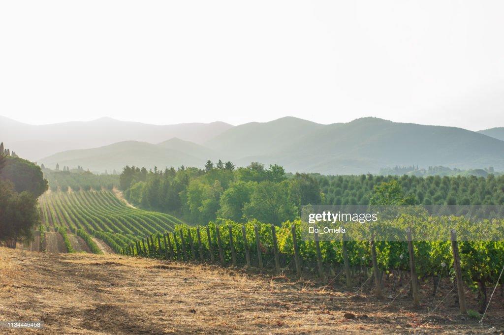 vignobles et paysages en Toscane. Italie : Photo