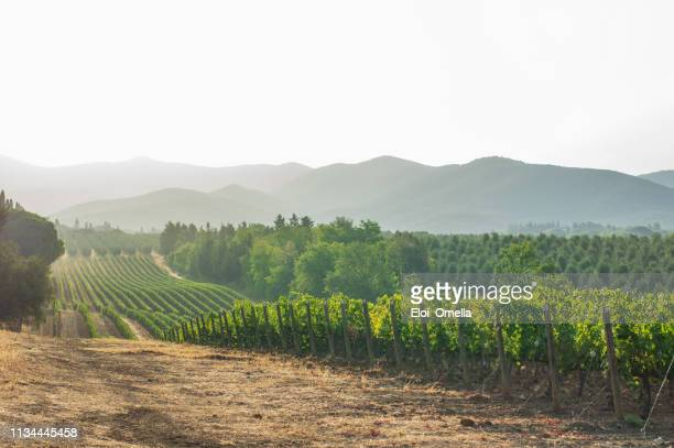 vineyards and landscape in tuscany. italy - campo foto e immagini stock
