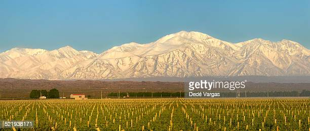 Vineyards and mountain snow