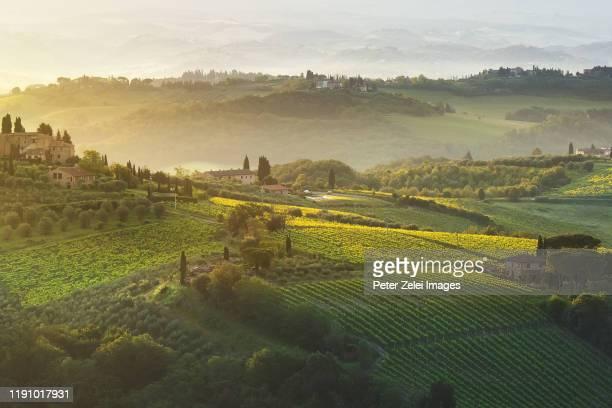 vineyards and olive tree plantations in san gimignano area, tuscany - サンジミニャーノ ストックフォトと画像
