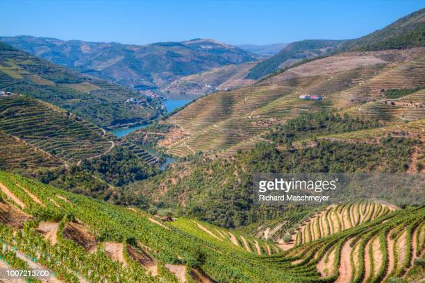 vineyards and the douro river, alto douro wine valley, unesco world heritage site, portugal, europe - traditionally portuguese stock pictures, royalty-free photos & images