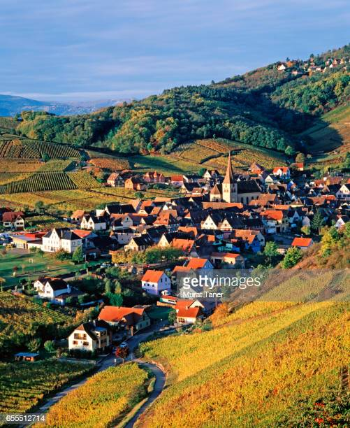vineyards and the village of niedermorschwihr - haut rhin stock pictures, royalty-free photos & images