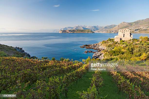 vineyards and torre crawford in san nicola arcella, calabria italy - calabria stock pictures, royalty-free photos & images
