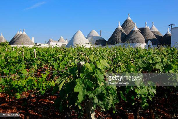vineyards and trullis, the traditional conical dwellings , Puglia, Italy