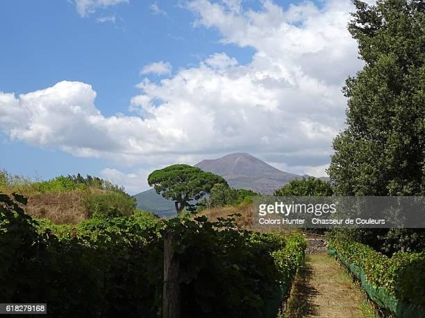 vineyards and vesuvius - mt vesuvius stock pictures, royalty-free photos & images