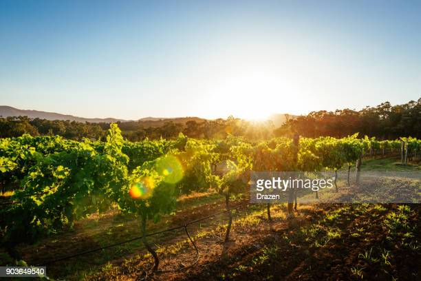 Vineyards and wine-making of quality wines