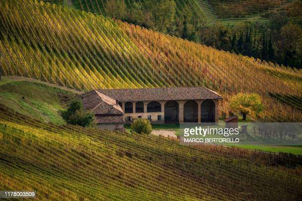 Vineyards are pictured on October 25, 2019 in Novello, near Cuneo, Northwestern Italy.