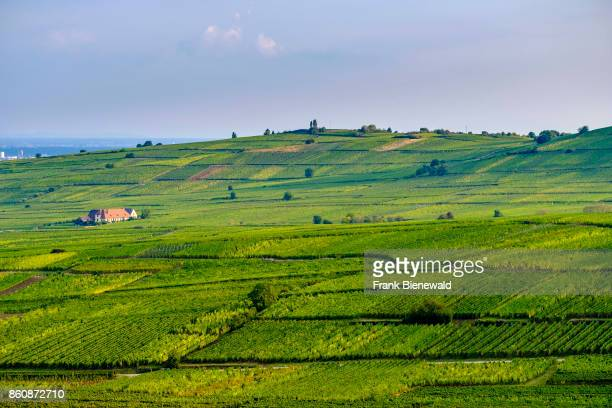 Vineyards are surrounding the historical town at the foot of Alsace hills