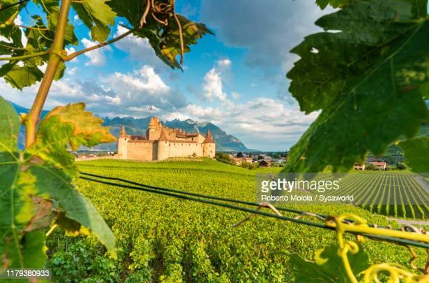 vineyards around aigle castle, switzerland - ヴォー州 ストックフォトと画像