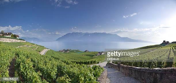 vineyards around lake leman, montreux, switzerland - meer van genève stockfoto's en -beelden