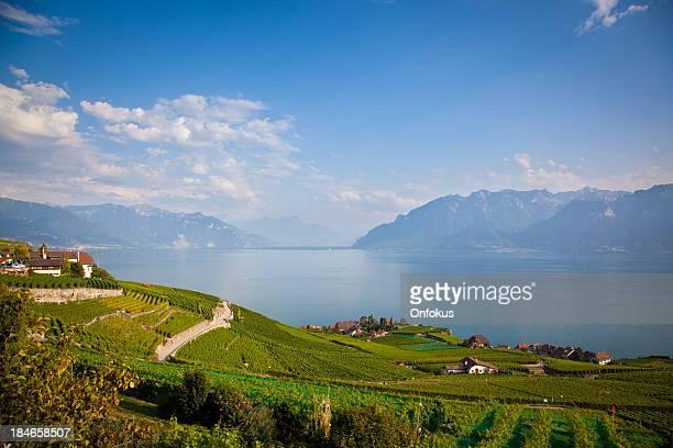 vineyards around lake leman - meer van genève stockfoto's en -beelden