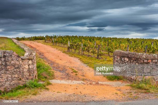 vineyards around romanèche-thorins, france - beaujolais nouveau stock pictures, royalty-free photos & images