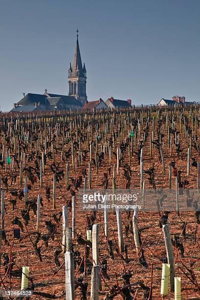 Vineyards around Saint Andelain in Burgundy