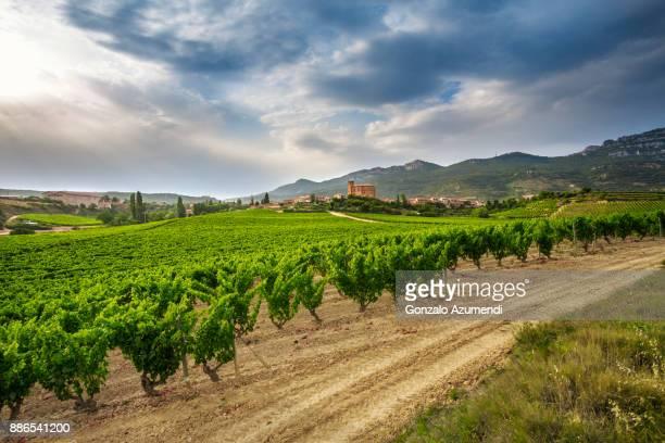 Vineyards at Remirez de Ganuza Wineries in Rioja Alavesa