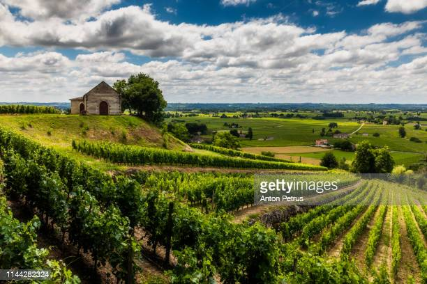 vineyards at summer. bordeaux, france - bordeaux stock pictures, royalty-free photos & images