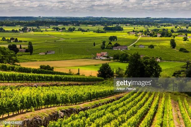 vineyards at sunset. bordeaux, france - ボルドー ストックフォトと画像