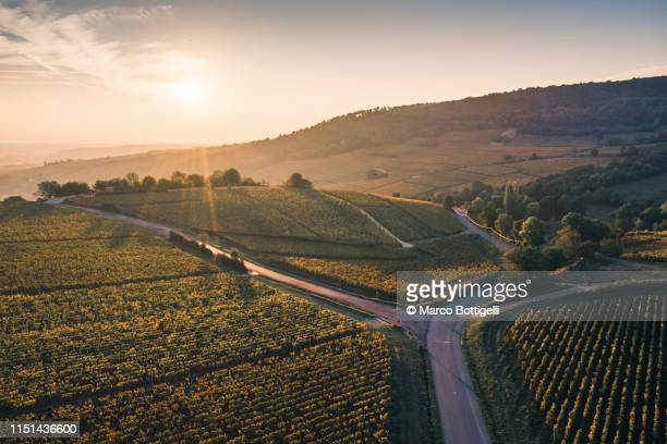 vineyards at sunset, burgundy, france - french culture stock pictures, royalty-free photos & images