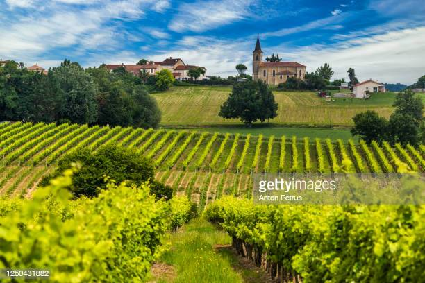 vineyards at sunset. gascony, france - gironde stock pictures, royalty-free photos & images