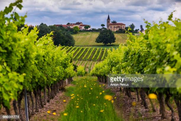 vineyards at sunset. gascony, france - bordeaux wine stock photos and pictures