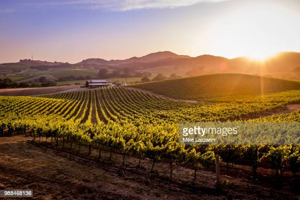 vineyards at sunset in napa valley, california, usa. - napa valley stock pictures, royalty-free photos & images