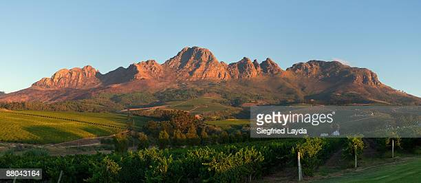 Vineyards at sunset in Western Cape