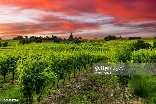 vineyards at sunset. mendoza, argentina - argentina stock pictures, royalty-free photos & images