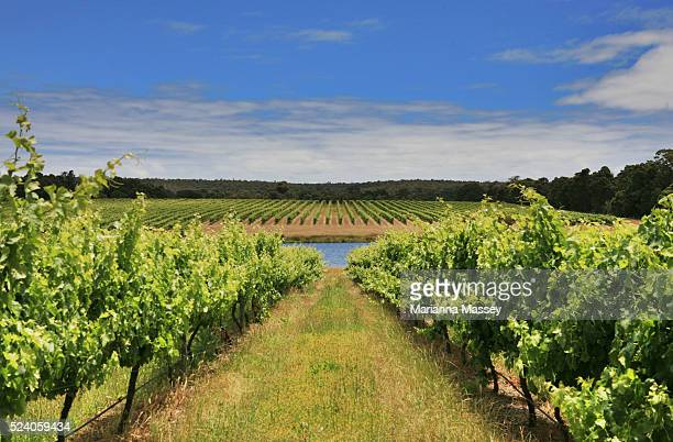 Vineyards at the Barwick Estate winery in the Margaret River Wine Region Margaret River is a town and river in the South West of Western Australia...