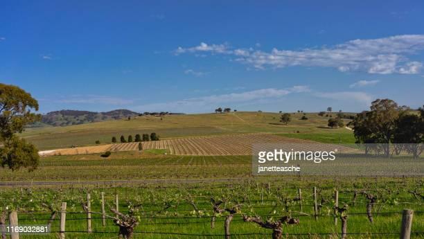 vineyards, barossa valley, south australia, australia - barossa valley stock pictures, royalty-free photos & images