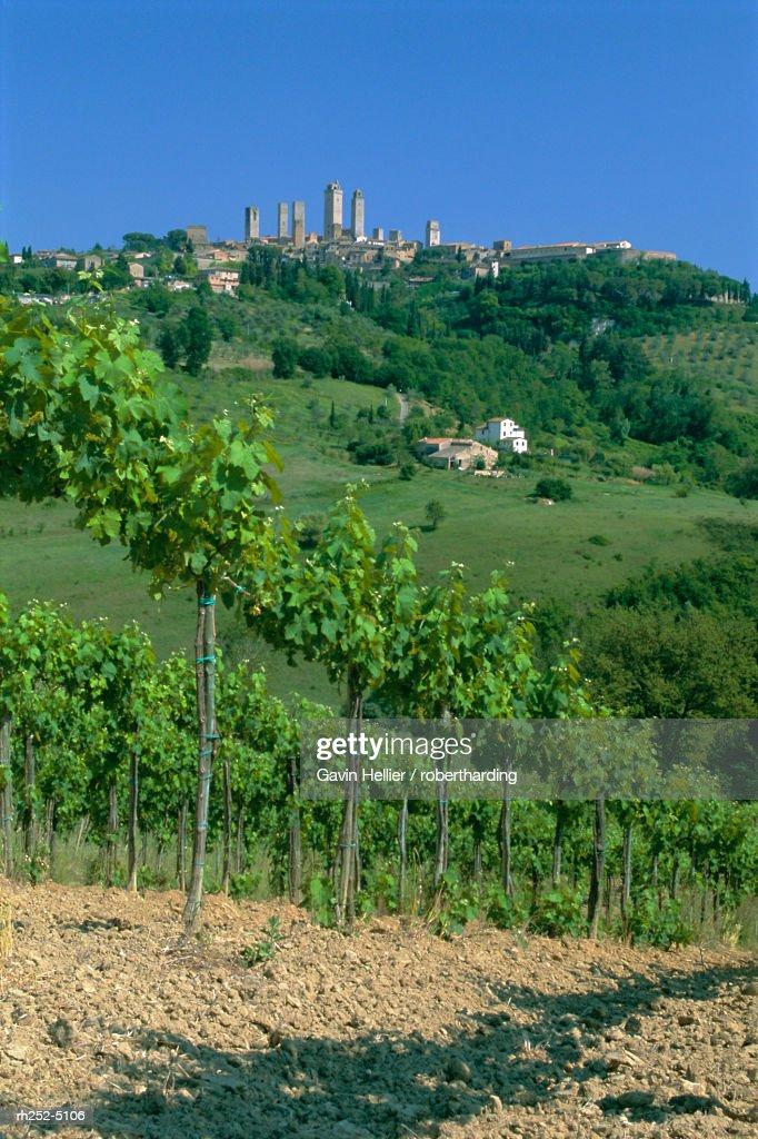 Vineyards below the town of San Gimignano, Tuscany, Italy, Europe : Stockfoto