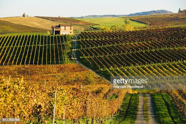 Vineyards Beside Unpaved Road