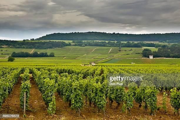 Vineyards, Burgundy, France