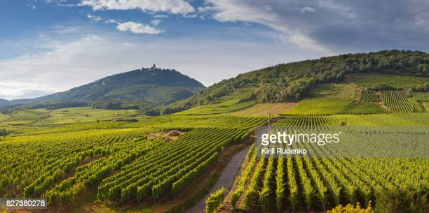 vineyards by the footsteps of the mountains in alsace, france - weinbau stock-fotos und bilder