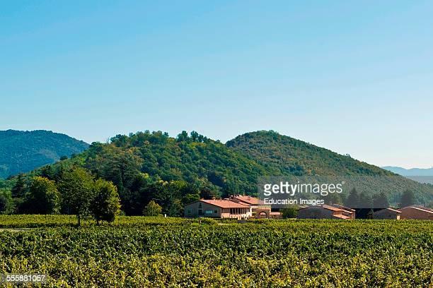 Vineyards Camignone Di Passirano Franciacorta Lombardy Italy