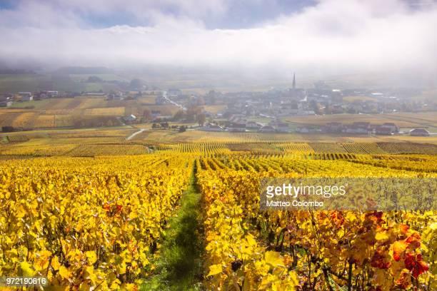 vineyards, chamery, champagne ardenne, france - マルヌ県 ストックフォトと画像