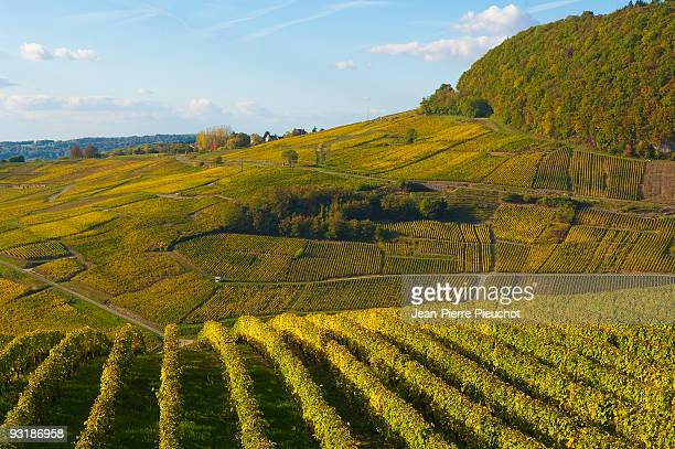 vineyards Château Chalon Jura France