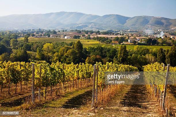 vineyards draping hillsides - モンテファルコ ストックフォトと画像