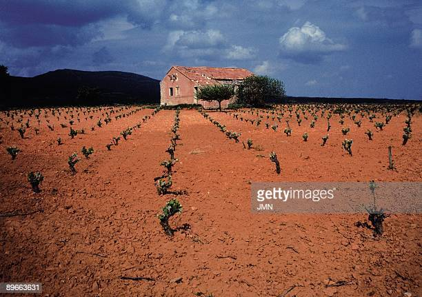 Vineyards General view of a vineyard and a house Requena Valencia province